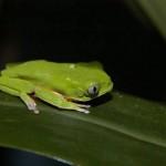 Os anfibios também tem sua importância na natureza e precisam se camuflar para se proteger.