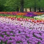 As flores mais raras do mundo: fotos