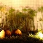 Iluminação destaca as plantas do jardim