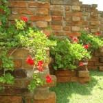A beleza das flores invadem um muro rústico