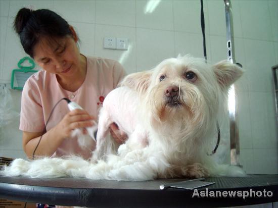 Pet Shop seu cachorro no salão de beleza, a higiene é fundamental
