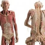 A anatomia humana é algo que fascina