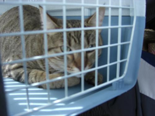 Existem regras especificas para o transporte de animais de estimação