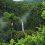 Cachoeira na Floresta (Foto:Divulgação)