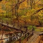 Floresta no outono (Foto:Divulgação)