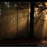 Fim de tarde na Floresta (Foto:Divulgação)