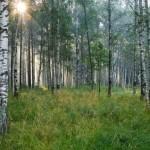 Florestas pelo mundo (Foto:Divulgação)