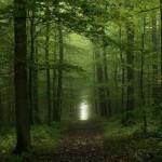 Floresta repleta de verde (Foto:Divulgação)
