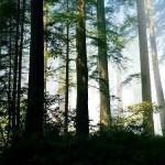 Floresta Temperada da China (Foto:Divulgação)