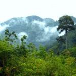 Floresta em Borneo (Foto:Divulgação)