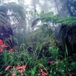 Floresta Tropical (Foto:Divulgação)