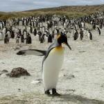 Ilhas Malvinas – Fotos, roteiro de viagem 2