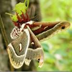 Borboletas alimentam-se de Néctar (Foto:Divulgação)