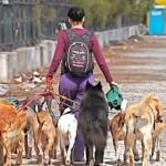 Castrar animal de estimação: motivos, benefícios