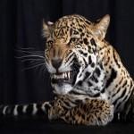 Expressões inusitadas de animais: fotos