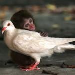 Amizades inusitadas entre animais – fotos