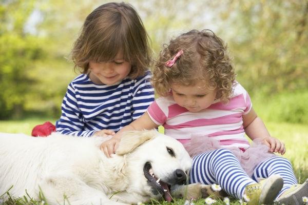 Dicas para acalmar os cães 5