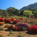 Kirstenbosch National Botanical Garden, na África do Sul (Foto:Divulgação)