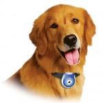 Produtos curiosos para cachorros: fotos