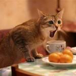 Gatinho na mesa protegendo seu café da manhã (Foto:Divulgaçao)
