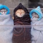 Gatinhos aquecidos (Foto:Divulgaçao)
