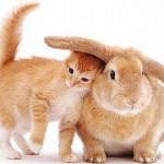 Gatinho e o coelho em momento de ternura(Foto:Divulgaçao)