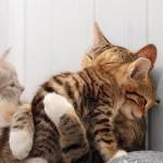 Gatinhos abraçados (Foto:Divulgaçao)