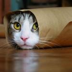 gato engraçado 4