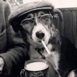 Cachorrinho de chapéu e cigarro(Foto:Divulgaçao)