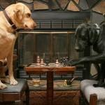 Cachorrinho jogando xadrez (Foto:Divulgaçao)