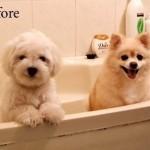 Cachorrinho antes do banho(Foto:Divulgaçao)