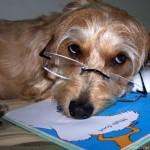 Cachorrinho de óculos (Foto:Divulgaçao)