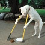 Cachorrinho esperto e higiênico (Foto:Divulgaçao)