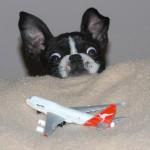Cachorrinho assustado com o brinquedo (Foto:Divulgaçao)
