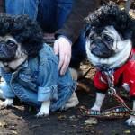 Cachorrinhos com roupa e peruca (Foto:Divulgaçao)