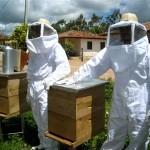 A apicultura visa à extração de mel, própolis, pólen e outras substâncias produzidas pelas abelhas.