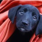 Filhotes de cachorro para adoção SP