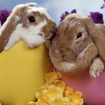 Os coelhos fazem parte da tradição da Páscoa (Foto: Divulgação)