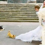Cachorro mordendo a grinalda da Noiva (Foto: Divulgação)