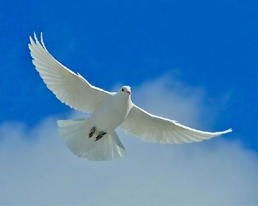A paz vem de dentro de você mesmo, não procure a sua volta -Buda(Foto:Divulgação)