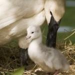 Mãe cuida e protege seu filhote de todos os perigos