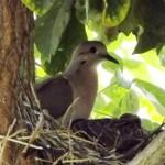 Mãe cuida do descanso de seu filhote no ninho