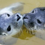 Mamãe foca e seu filhote indefeso