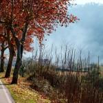 Árvores no outono (Foto: Divulgação)