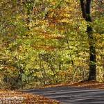 Estrada no outono (Foto: Divulgação)