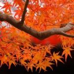 Outono no Japão (Foto: Divulgação)