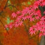 Plantas típicas japonesas (Foto: Divulgação)