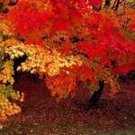 Outono em Kyoto (Foto: Divulgação)