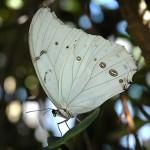 As borboletas mais bonitas da natureza: fotos