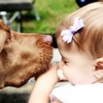 O olfato do animal estreita a ligação entre animal e criança